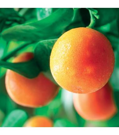 Appelsiinin 100% eteerinen öljy